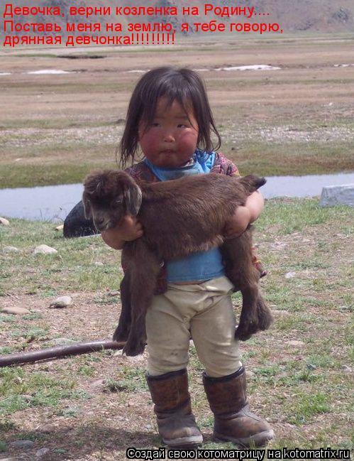 Котоматрица: Девочка, верни козленка на Родину…... Поставь меня на землю, я тебе говорю, дрянная девчонка!!!!!!!!!