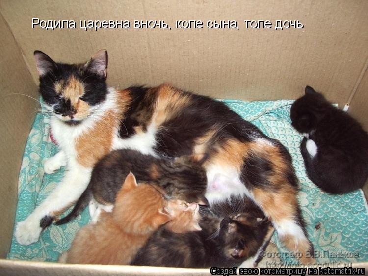 Котоматрица: Родила царевна вночь, коле сына, толе дочь