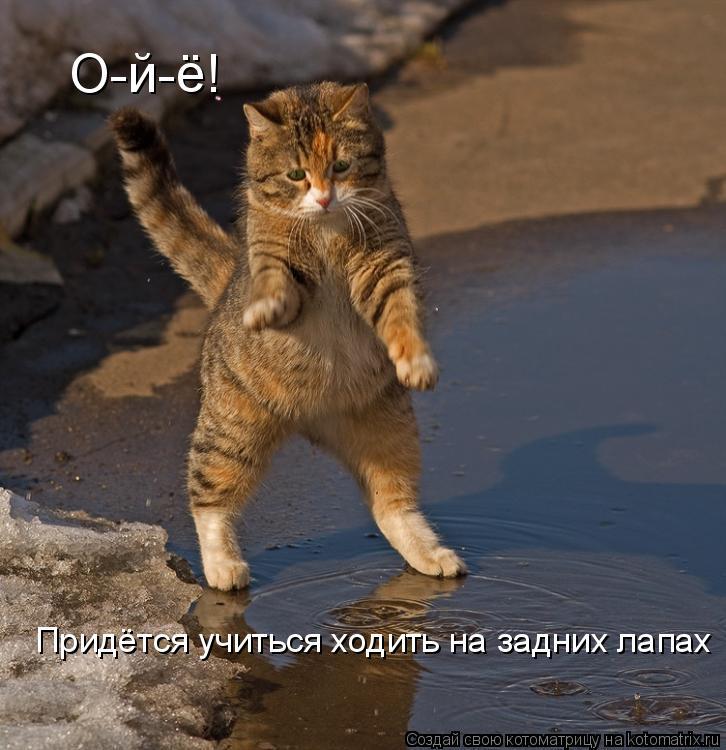Котоматрица: О-й-ё! Придётся учиться ходить на задних лапах