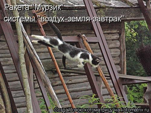 """Котоматрица: Ракета """"Мурзик""""  системы """"воздух-земля-завтрак"""""""