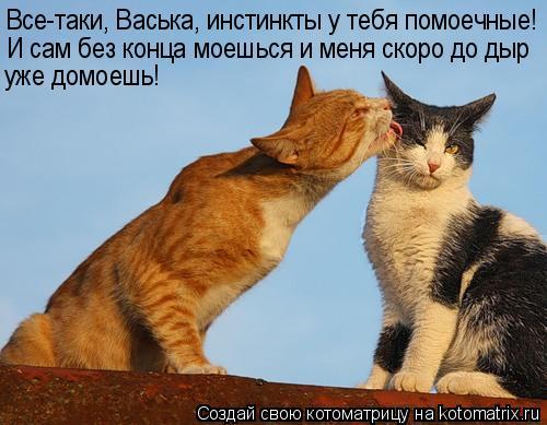 Котоматрица: Все-таки, Васька, инстинкты у тебя помоечные! И сам без конца моешься и меня скоро до дыр уже домоешь!
