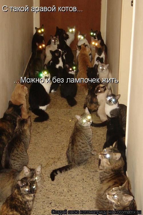 Котоматрица: С такой аравой котов... ...Можно и без лампочек жить