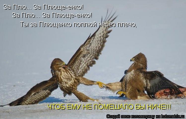 Котоматрица: За Плю... За Плюще-енко! За Плю... За Плюще-енко! Ты за Плющенко поплюй через плечо, ЧТОБ ЕМУ НЕ ПОМЕШАЛО БЫ НИЧЕ!!!