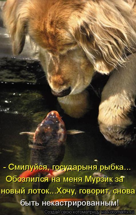 Котоматрица: Обозлился на меня Мурзик за - Смилуйся, государыня рыбка... новый лоток...Хочу, говорит, снова быть некастрированным!
