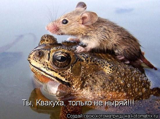 Котоматрица: Ты, Квакуха, только не ныряй!!!