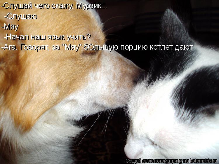 """Котоматрица: -Слушай чего скажу, Мурзик... -Слушаю -Мяу -Начал наш язык учить?  -Ага. Говорят, за """"Мяу"""" бОльшую порцию котлет дают"""