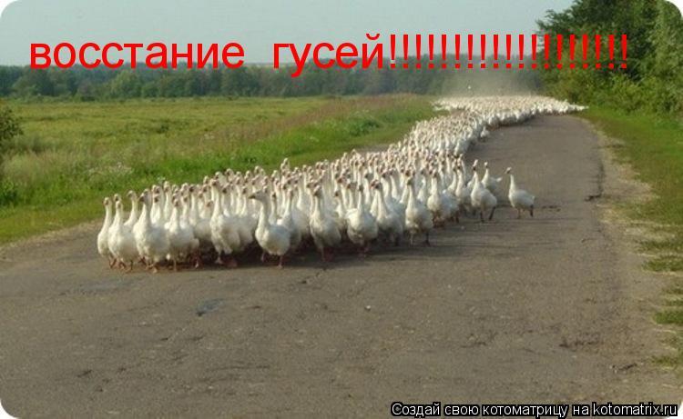 Котоматрица: восстание  гусей!!!!!!!!!!!!!!!!!!!