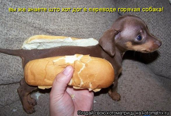 Котоматрица: вы же знаете што хот дог в переводе горячая собака!