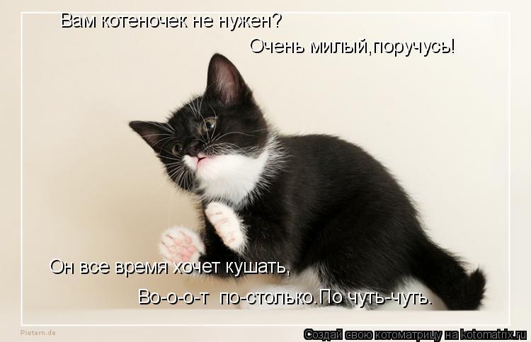 Котоматрица: Вам котеночек не нужен? Он все время хочет кушать, Во-о-о-т  по-столько.По чуть-чуть. Очень милый,поручусь!
