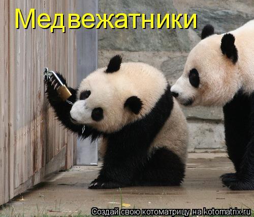 Котоматрица: Медвежатники