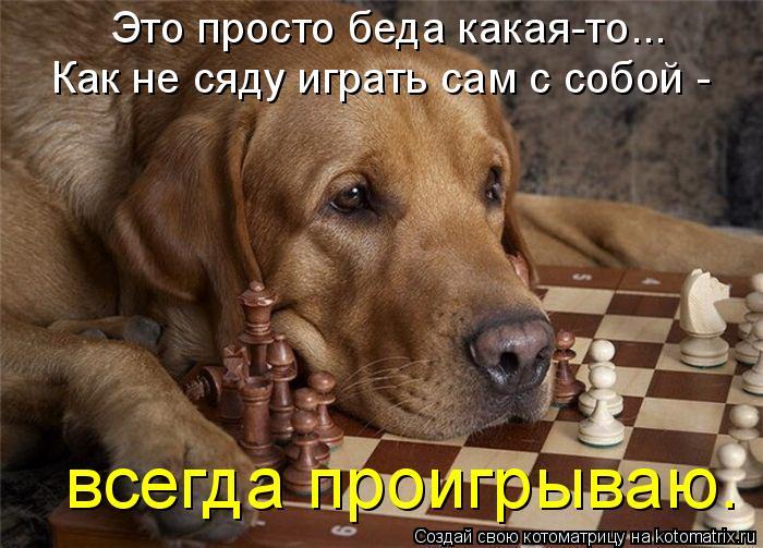 Котоматрица: Это просто беда какая-то... Как не сяду играть сам с собой - всегда проигрываю.