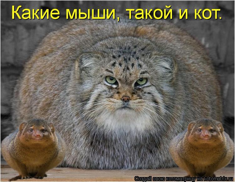 Котоматрица: Какие мыши, такой и кот.