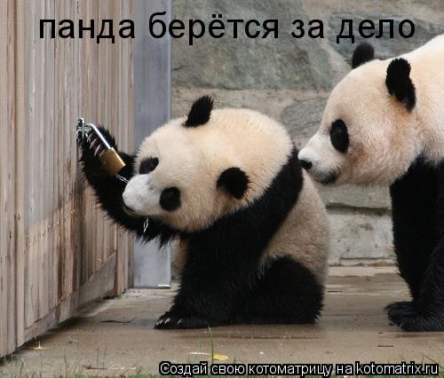 Котоматрица: панда берётся за дело
