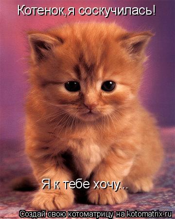 Котоматрица: Котенок,я соскучилась! Я к тебе хочу...