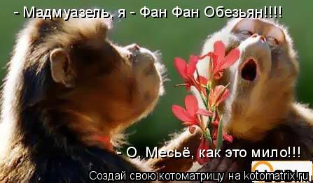 Котоматрица: - Мадмуазель, я - Фан Фан Обезьян!!!! - О, Месьё, как это мило!!!