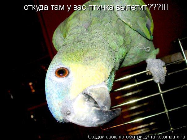 Котоматрица: откуда там у вас птичка вылетит???!!!