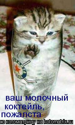 Котоматрица: ваш молочный коктейль,  пожалста