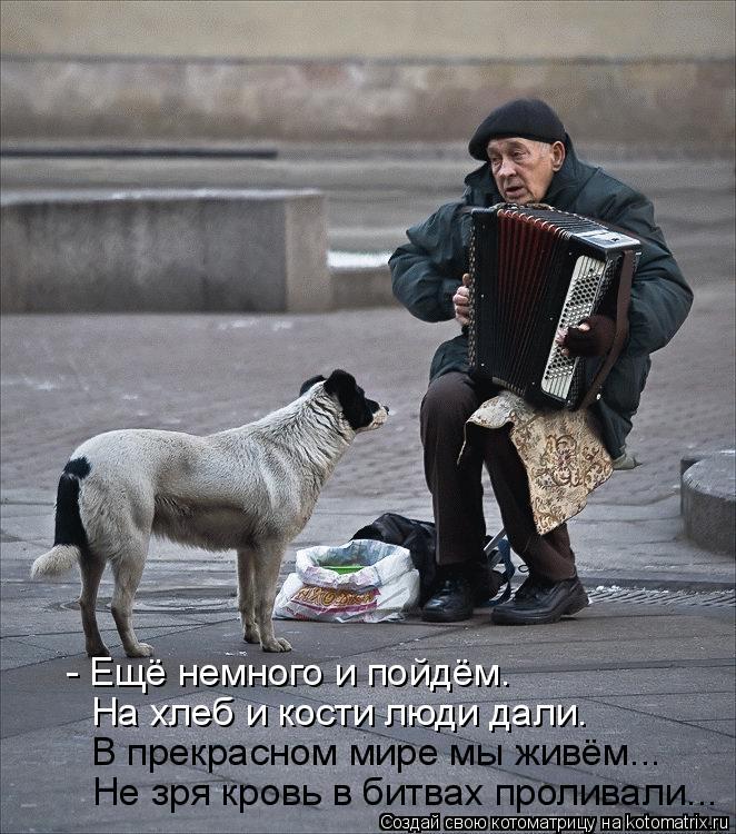 Котоматрица: На хлеб и кости люди дали. - Ещё немного и пойдём. В прекрасном мире мы живём... Не зря кровь в битвах проливали...