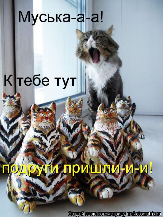 Котоматрица: Муська-а-а! К тебе тут подруги пришли-и-и!