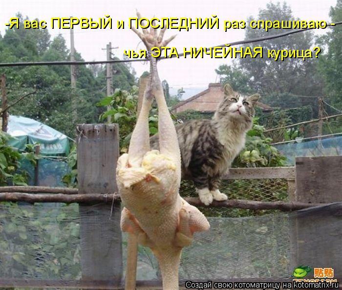Котоматрица: чья ЭТА НИЧЕЙНАЯ курица? -Я вас ПЕРВЫЙ и ПОСЛЕДНИЙ раз спрашиваю -