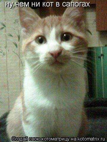 Котоматрица: ну чем ни кот в сапогах