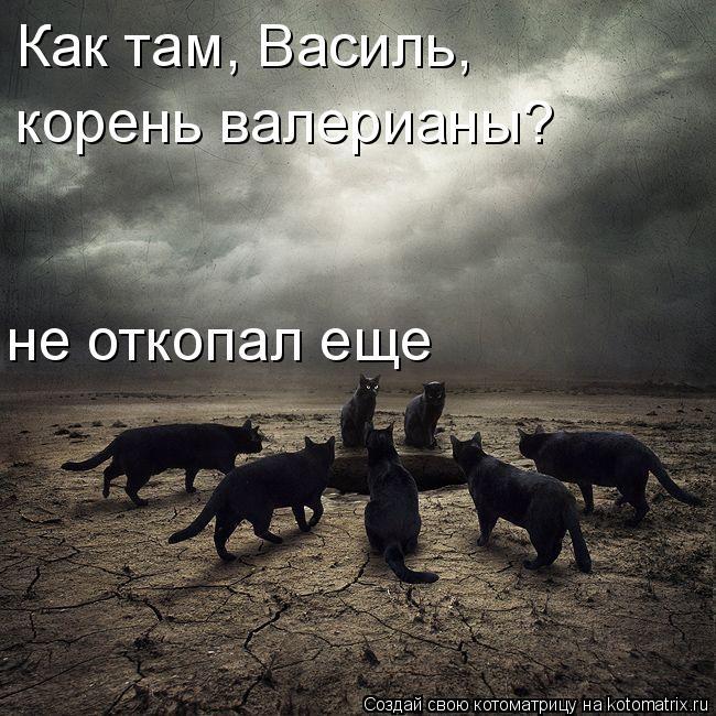 Котоматрица: Как там, Василь, не откопал еще корень валерианы?