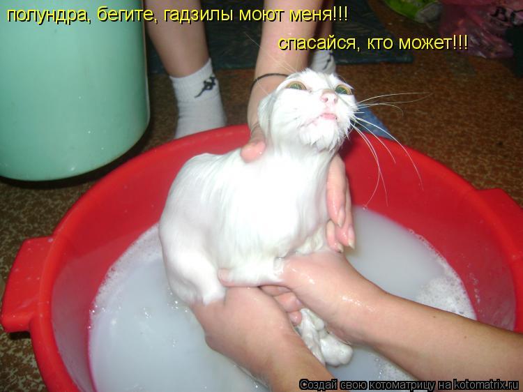 Котоматрица: полундра, бегите, гадзилы моют меня!!! спасайся, кто может!!!