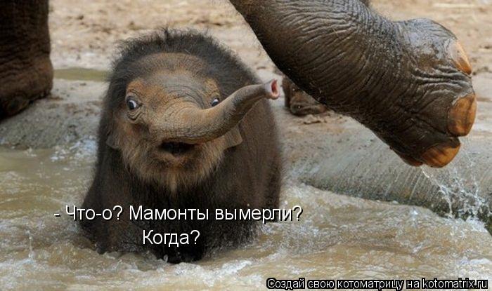 Котоматрица: - Что-о? Мамонты вымерли? Когда?