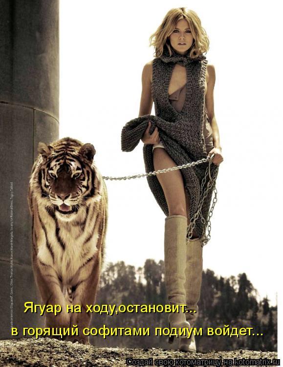 Котоматрица: Ягуар на ходу,остановит... в горящий софитами подиум войдет...