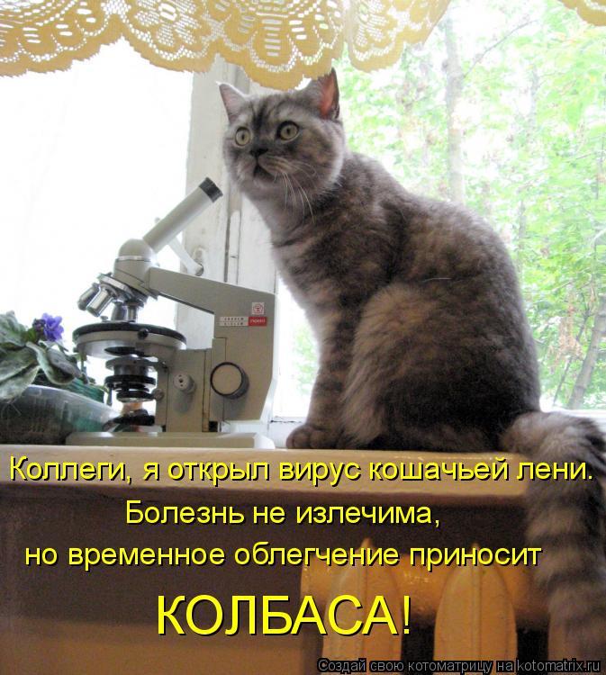 Котоматрица: Коллеги, я открыл вирус кошачьей лени. Болезнь не излечима,  но временное облегчение приносит КОЛБАСА!