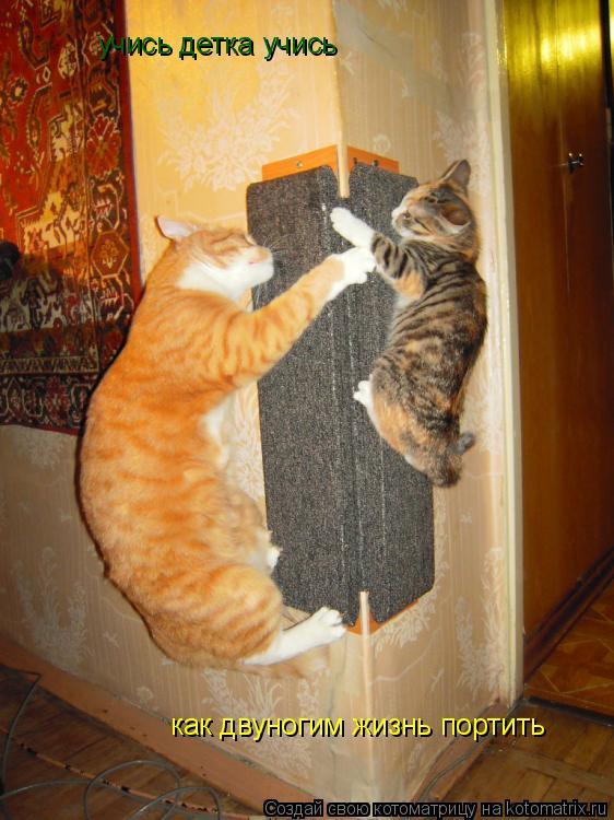 Когтедралка для кошки своими руками видео
