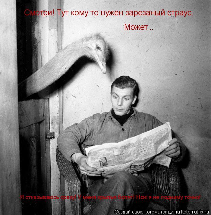 Котоматрица: Смотри! Тут кому то нужен зарезаный страус. Может... Я отказываюсь сразу! У меня крылья болят! Нож я не подниму точно!
