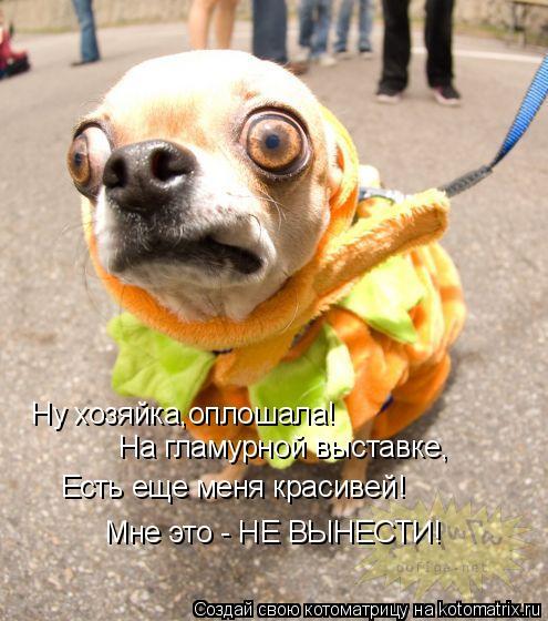 Котоматрица: Ну хозяйка,оплошала! На гламурной выставке, Есть еще меня красивей! Мне это - НЕ ВЫНЕСТИ!