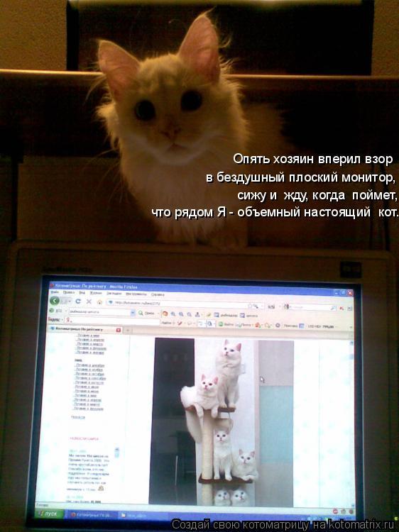 Котоматрица: Опять хозяин вперил взор в бездушный плоский монитор, сижу и  жду, когда  поймет,  что рядом Я - объемный настоящий  кот.