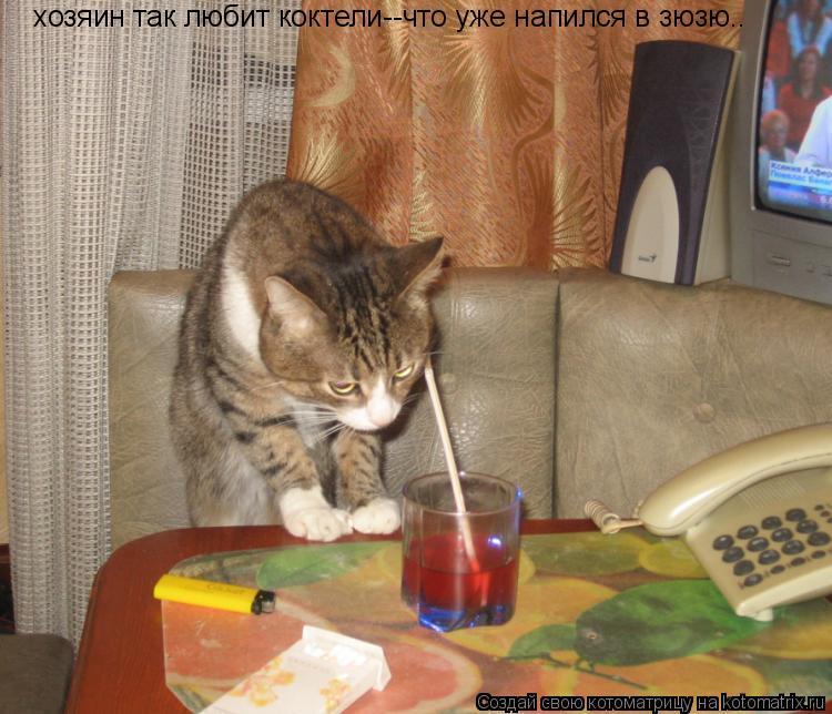 Котоматрица: хозяин так любит коктели--что уже напился в зюзю..