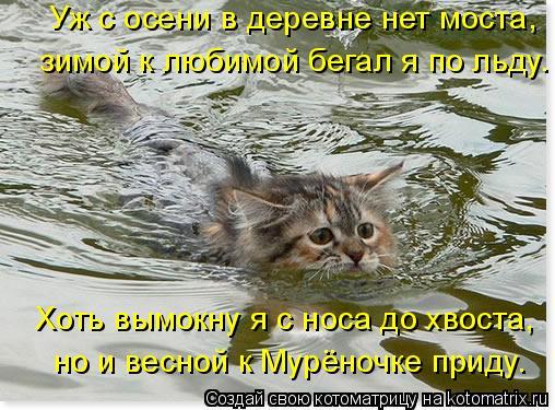Котоматрица: Уж с осени в деревне нет моста, зимой к любимой бегал я по льду. Хоть вымокну я с носа до хвоста, но и весной к Мурёночке приду.