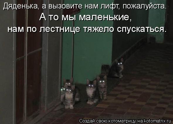 Котоматрица: Дяденька, а вызовите нам лифт, пожалуйста. А то мы маленькие, нам по лестнице тяжело спускаться.