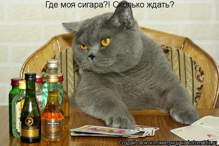 Котоматрица: Где моя сигара?! Сколько ждать?
