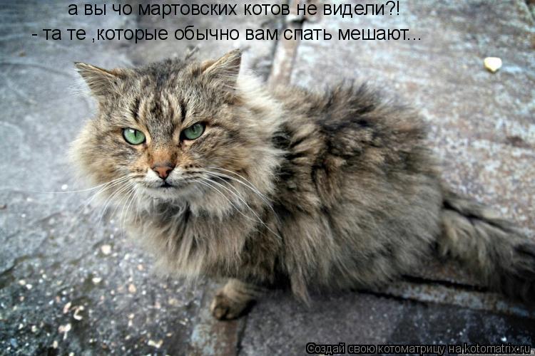 Котоматрица: а вы чо мартовских котов не видели?! - та те ,которые обычно вам спать мешают...