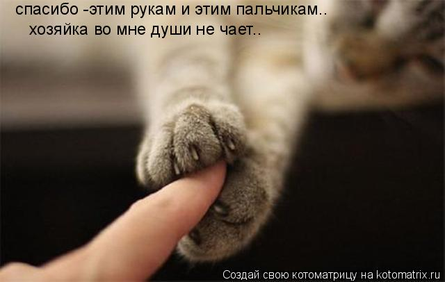 Котоматрица: хозяйка во мне души не чает.. спасибо -этим рукам и этим пальчикам..