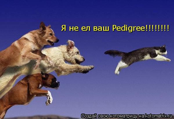 Котоматрица: Я не ел ваш Pedigree!!!!!!!!
