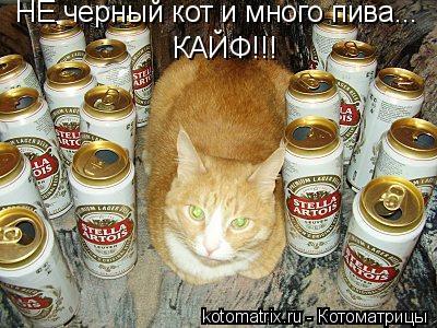 Котоматрица: НЕ черный кот и много пива... КАЙФ!!!