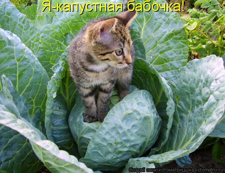 Котоматрица: Я-капустная бабочка!