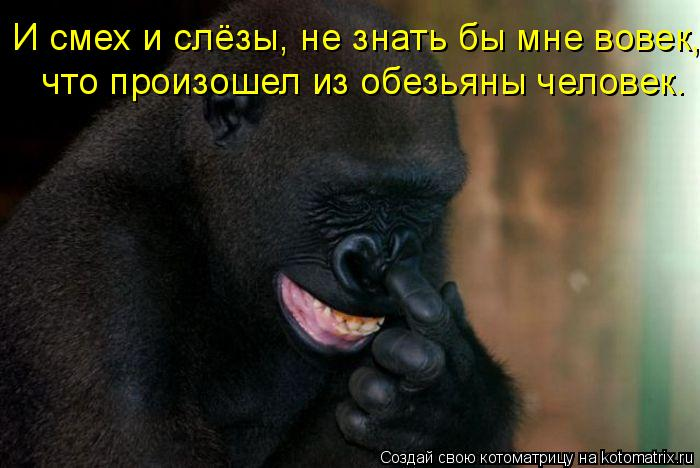 Котоматрица: И смех и слёзы, не знать бы мне вовек, что произошел из обезьяны человек.
