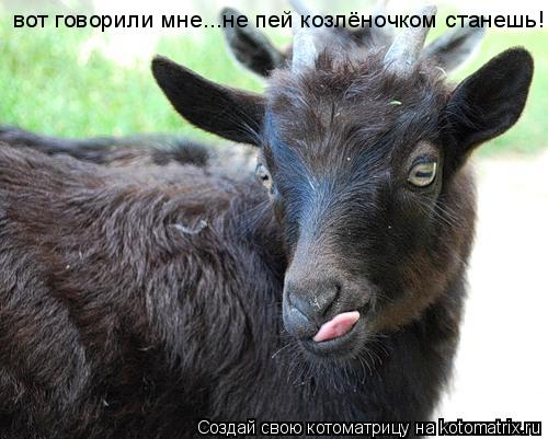 Котоматрица: вот говорили мне...не пей козлёночком станешь!