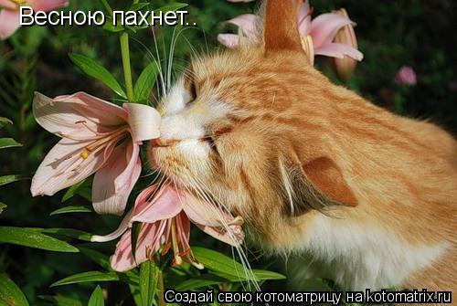 Котоматрица: Весною пахнет..