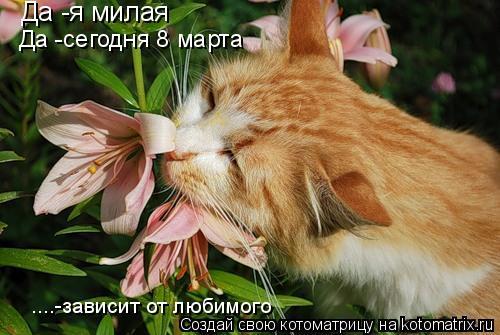 Котоматрица: Да -я милая Да -сегодня 8 марта ....-зависит от любимого