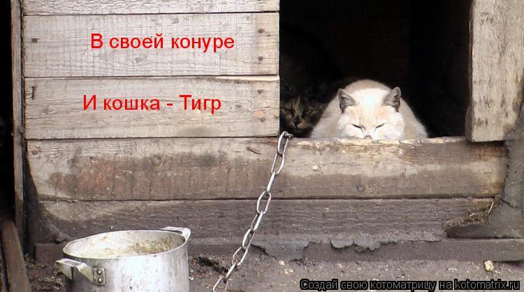 Котоматрица: В своей конуре  И кошка - Тигр