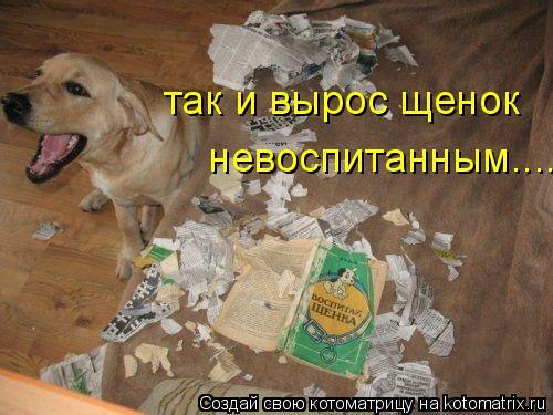 Котоматрица: так и вырос щенок  невоспитанным....