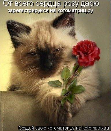 Котоматрица: От всего сердца розу дарю зарегестрируйся на котоматриц.ру